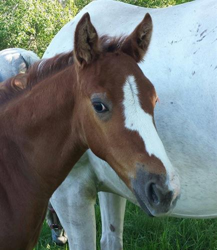 Horse Classified Ad Ante Up The Silver