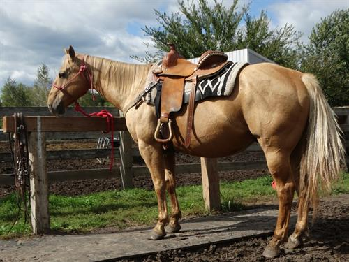 Horse Classified Ad Emmit