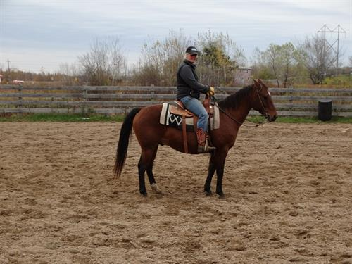 Horse Classified Ad Frankie
