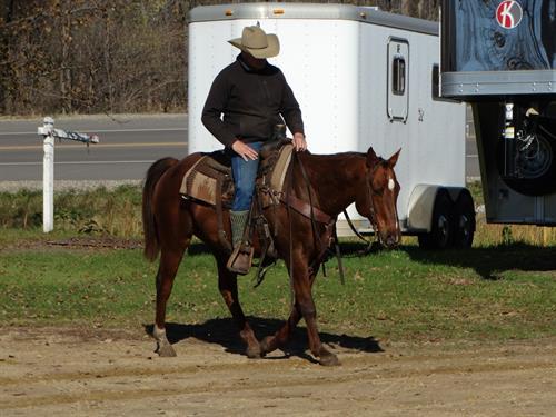 Horse Classified Ad Danny