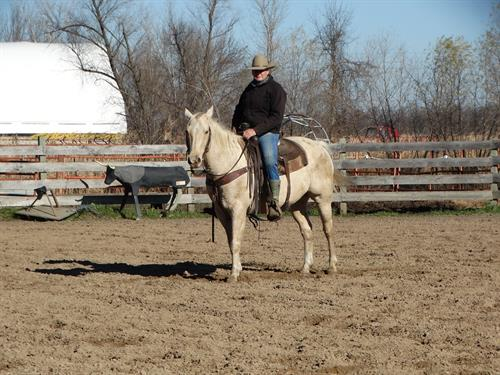 Horse Classified Ad Concho
