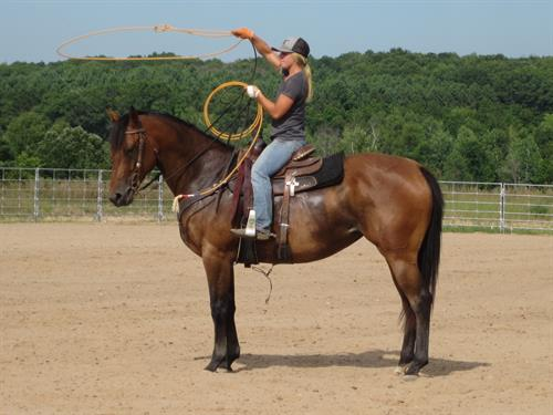 Horse Classified Ad MML SPECIAL LIL TOLL