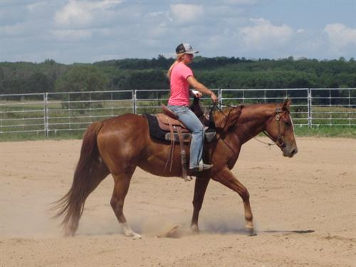 Horse Classified Ad MML CROWM CAT SPECAL