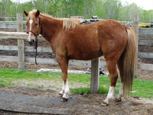 Horse Classified Ad Tucker