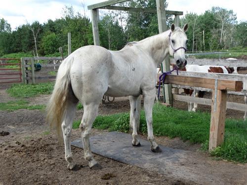 Horse Classified Ad Fin