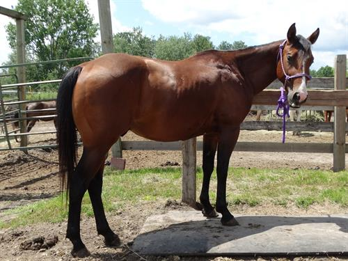 Horse Classified Ad Cooper