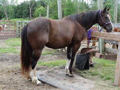 Horse Classified Ad Splash