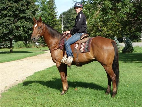 Horse Classified Ad Sheriff