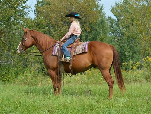 Horse Classified Ad BLUE BOON OAK