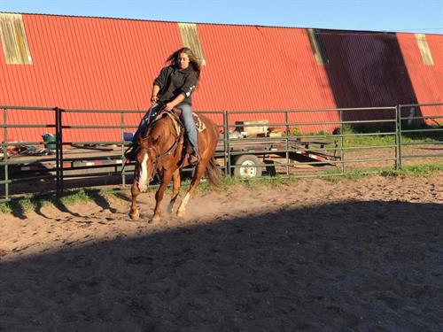Horse Classified Ad CHAMPION
