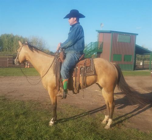 Horse Classified Ad TWO TIMING CLASS