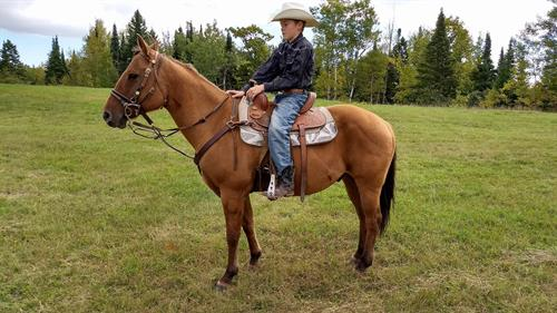 Horse Classified Ad REMINGTON