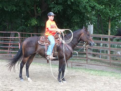 Horse Classified Ad ANNIE