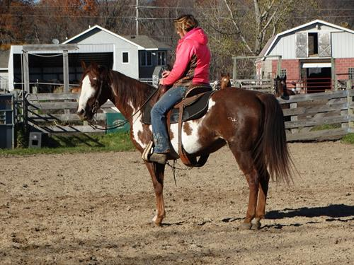 Horse Classified Ad Kiowa