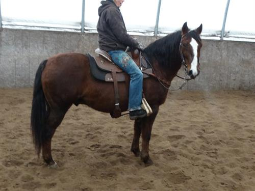 Horse Classified Ad Monty