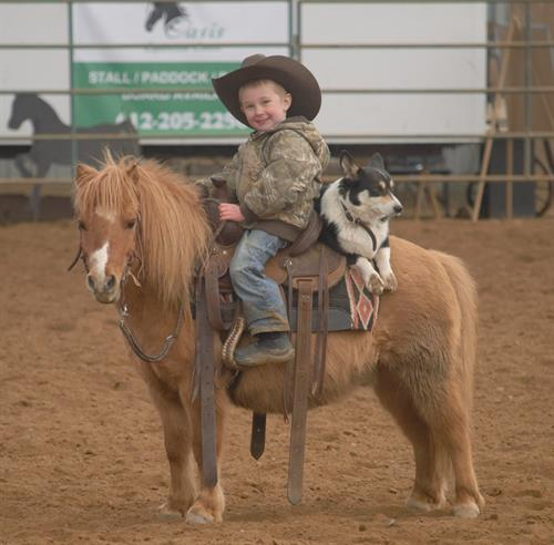 Buddy 10 yr old Dun Pony Gelding.  **VIDEO**Buddy is first class all the way. This little rock star is gentle in every way about absolutely everything and I can honestly say that because my kids have done everything in the world with him.