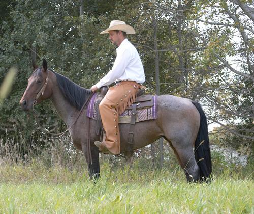 Tancee Azuls Rose 2011 AQHA Bay Roan Mare.  **VIDEO**  Here's a nice broke and very pretty bay roan mare. Rose has been used on the ranch and in the arena. She rides very nice and has lot of training. She stands 14.3 hands and is very well put together.