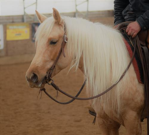 Zippos Satin Image 2013 AQHA Palomino Mare. **VIDEO**  You want to talk about a pretty and very fancy palomino mare, Satin is the one.  This sweet mare is shedding out to be a deep golden color and she has a snow white mane that never ends.