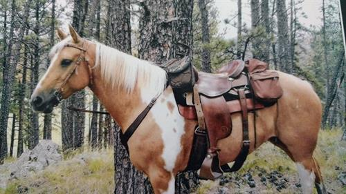 Nulynxtolena 2005 APHA Palomino Tobiano Mare.  BORN, RAISED AND TRAINED BY ONE FAMILY. She has been ridden at most of the state parks in Minnesota and the Dakotas (Custer & Medora). She has been on lots of trails, water crossings, bridges, Buffalo were no problem for this mare.