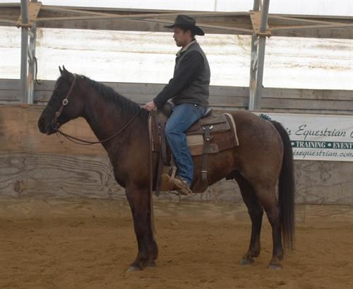 JS CAN BEE BLUE aka Pistol 2007 AQHA Blue Roan Gelding.  Pistol is a very pretty blue roan gelding. He has a picture perfect head with a big soft kind eye. He is taylor made from head to toe. Pistol is a very enjoyable horse and does everything with ease.