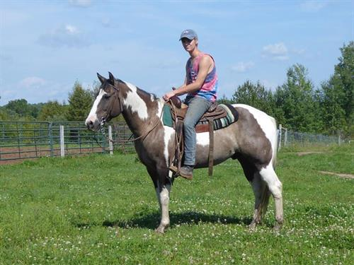 Horse Classified Ad BIEBERS CALYPSO