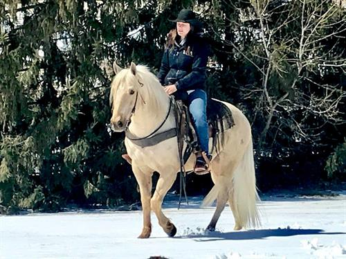 Pierces Sonny Bob  15 yr old AQHA Palomino Gelding.  Bob is an extremely well broke gelding that stands 14.2 hands. He has been used for everything from senior pictures to a beginner's trail horse to fun day shows to pulling sleds full of kids in the snow. Bob stands well for the farrier,tacks-up good and rides off quiet every time.