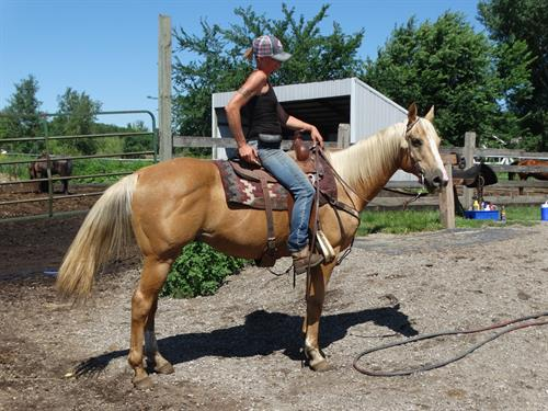 Horse Classified Ad Tango
