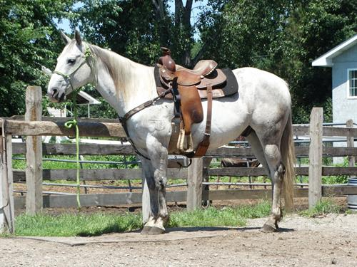 Horse Classified Ad Marshall