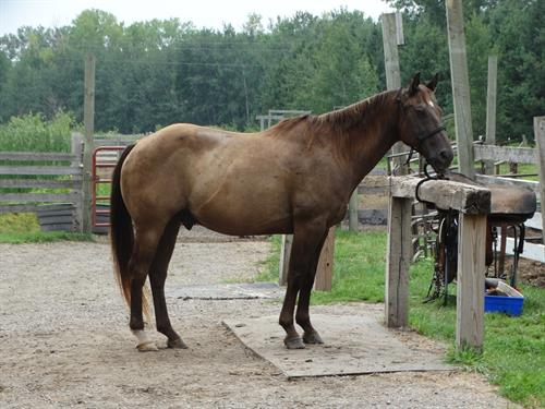 Horse Classified Ad Hijack