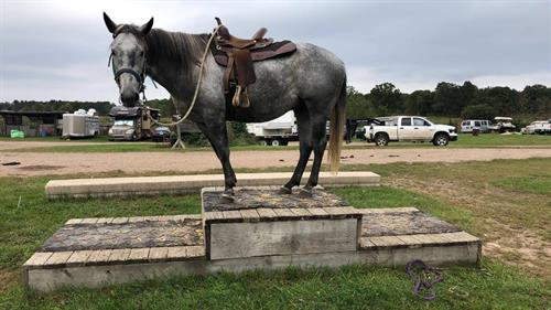 Horse Classified Ad MOSCATO
