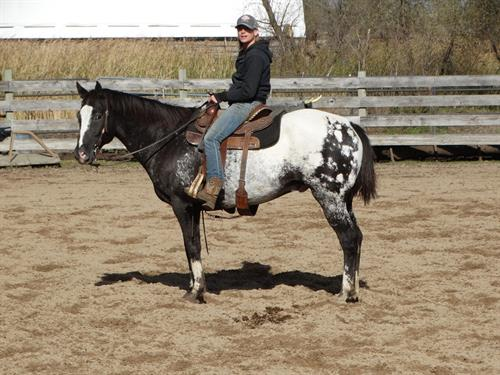 Horse Classified Ad Ice, (Heza Ice Storm)