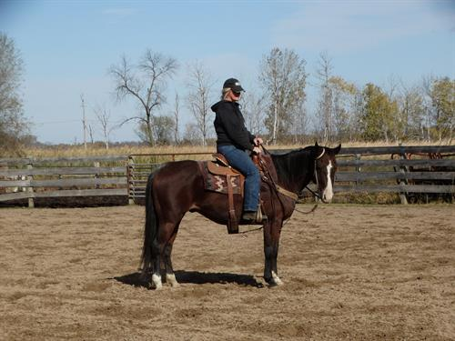 Blue Duck Dancer, AQHA 10yr Bay Gelding, Broke, Broke