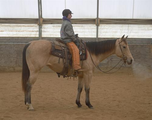 Horse Classified Ad LITTLE LUCKY TIGER