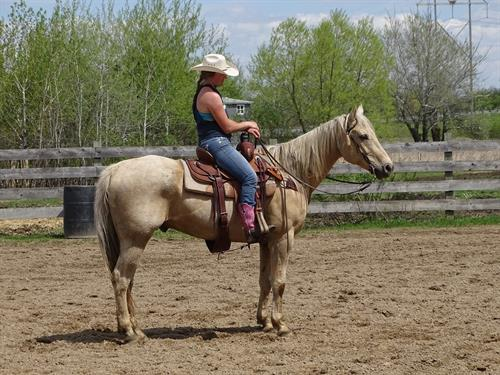 Arizona, Beautiful Palomino Gelding, Well broke and quiet