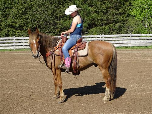 Hugo, Pretty Sorrel gelding, Well broke Ranch Horse, 14.3h