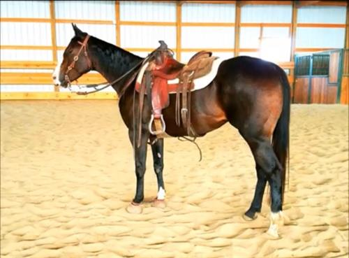Horse Classified Ad Sheza Corona Chick