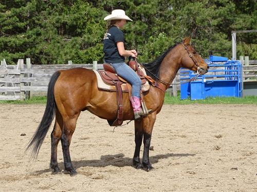 Simon, Pretty Bay Gelding, Mainly been trail ridden