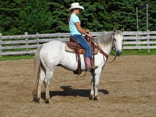 Horse Classified Ad Sylvester