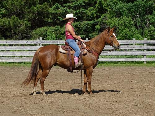 Horse Classified Ad Duncan
