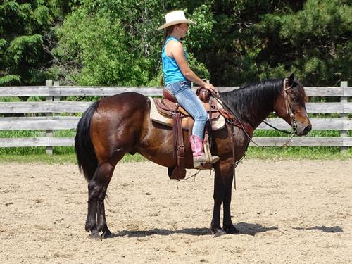 Cruz, Super broke and fast, looking for your next Barrel or cattle horse?