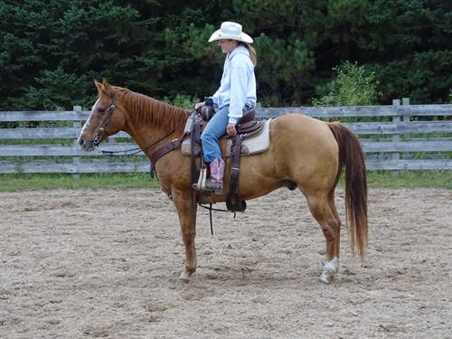 Horse Classified Ad Jasper
