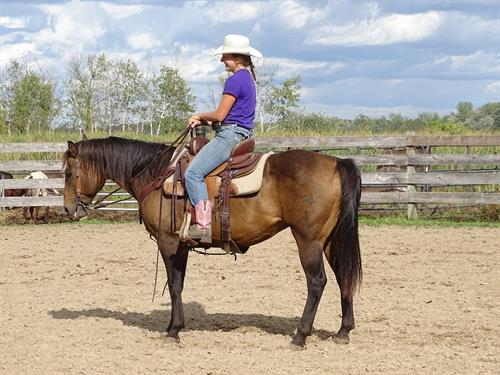 Concho, Beautiful Buckskin Gelding, Great trail horse, used on a ranch