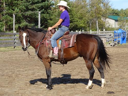 Oliver, Pretty Bay Gelding, Well broke gelding, Quiet Dispo