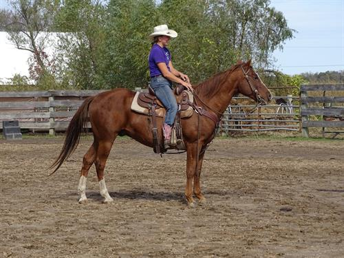 Dodger, Pretty Sorrel Gelding, 15h, arena or trails.