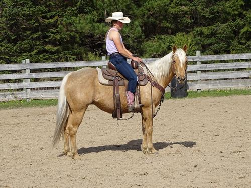 Chase, Beautiful Palomino Gelding, quick and catty, Chase Barrels or Cows