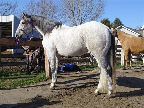 Horse Classified Ad Frost