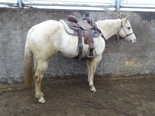 Horse Classified Ad Honey