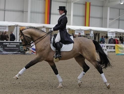 Horse Classified Ad Beau-Partriot