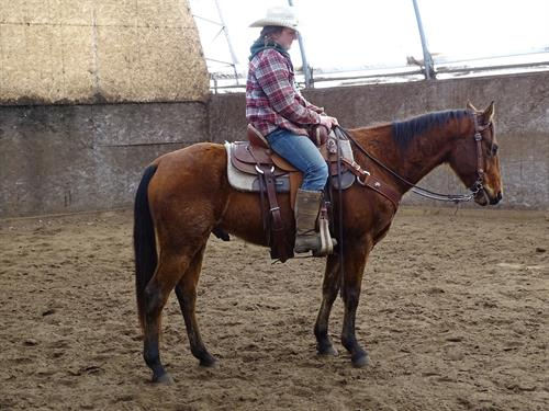 Horse Classified Ad Colby