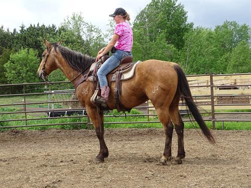Horse Classified Ad Nevada